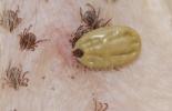 control de garrapatas, biodiversidad en la ganadería, Hongos acaropatógenos para el control de la garrapata, Plantas para el control de la garrapata