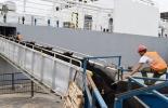 Para Irak zarpará otro barco con 19.000 bovinos, exportación de ganado, Irak, demanda, precios estables, mercado internacional, calidad de ganado, confianza en Colombia, sanidad animal, recuperar mercado, noticias de ganadería colombiana, CONtexto ganadero.