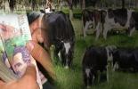 ganadería, ganadería Colombia, ganadería colombiana, CONtexto ganadero, noticias ganaderas, noticias ganaderas Colombia, costos ganadería, reducir costos, reducir costos ganadería, empresa ganadera, costos producción, ganadería y costos, leche, carne, ganaderos, ganaderos Colombia