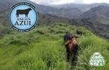 ganadería, ganadería colombia, ganadería colombiana, contexto ganadero, noticias ganaderas, noticias ganaderas colombia, angus azul, angus azul sostenible, programa sostenible angus azul, ganaderos sostenible, sostenibilidad, ganaderos, ganaderos colombia