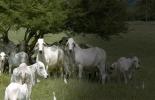 Ganadería, ganadería colombia, noticias ganaderas, noticias ganaderas colombia, CONtexto ganadero, día del medio ambiente, Ganadería y Medio Ambiente, ganadería colombiana sostenible, pastoreo racional voisin, ganadería ultra alta densidad, Ganadería agroecológica, ganadería amigable con el medio ambiente