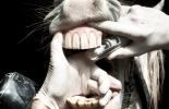 Ganadería, ganadería colombia, noticias ganaderas, noticias ganaderas colombia, CONtexto ganadero, analisis dentario, dientes, dientes de los equinos, dientes de los caballos, detemrinación edad de caballos, analisis dentario en los caballos, tipos de dientes de los equinos, cronología de dientes de los equinos, formula dentaria, caballos, equinos, ganaderos, ganaderos colombia