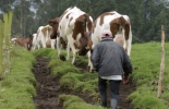 Movimiento bueno del ganado, movimiento malo del ganado, Movimiento limpiaparabrisas, mover ganado, comportamiento bovino, etología bovina, conjunto de vacas, bovinos, punto de balance en bovinos, definición de manejo de ganado, importancia de los bovinos, importancia del manejo animal, cómo se comunican las vacas, punto balance, coronavirus, coronavirus Colombia, COVID-19, cuarentena, Ganadería, ganadería colombia, noticias ganaderas, noticias ganaderas colombia, CONtexto ganadero