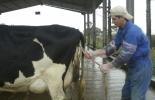 Recomendaciones retención placenta, qué hacer cuando hay retención de placenta, qué hacer para evitar retención de placenta, Detalles sobre retención de placenta en vacas, Retención placentaria en el ganado bovino, consecuencias retención placenta, prevención retención placenta, tratamientos retención placenta, retención placenta vacas, coronavirus, coronavirus Colombia, COVID-19, cuarentena, Ganadería, ganadería colombia, noticias ganaderas, noticias ganaderas colombia, CONtexto ganadero
