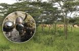 Ganadería, ganadería colombia, noticias ganaderas, noticias ganaderas colombia, CONtexto ganadero, Instituto Humboldt, Instituto Humboldt escarabajos, importancia de los escarabajos, escarabajos estercoleros, necesidad de los escarabajos para la ganadería, ganadería y escarabajos