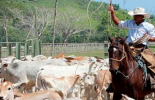 """""""Los ganaderos son unos verdaderos héroes"""": Juan Carlos Romero, no detuvieron sus actividades, arraigada cultura sanitaria, celebración del Día Nacional del Ganadero, instalaciones de Asogasucre, producción de alimentos, alimentos de primera necesidad, alimentos de la canasta familiar, ganaderos no se detienen, superan todos los obstáculos, Asogasucre, alimentos indispensables para la salud,  carne y la leche,  alta proteína y nutrición, pandemia, vacunaron el 99,5 % del hato, cultura sanitaria, condecorar"""