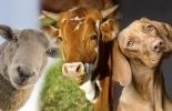 Terremotos vacas, estudio sobre terremotos vacas, Bovinos presienten los temblores previamente, bovinos sienten partículas en el aire, estudio sobre detección de terremotos, estudio Alemania vacas perros ovejas terremotos, coronavirus, coronavirus Colombia, COVID-19, cuarentena, Ganadería, ganadería colombia, noticias ganaderas, noticias ganaderas colombia, CONtexto ganadero