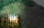 ganadería, ganadería colombia, noticias ganaderas, noticias ganaderas colombia, contexto ganadero, deforestación, reforestación, ganadería, conpes, ganadería reforestación ganaderos reforestan, cero deforestación