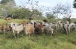 Ganadería, ganadería colombia, noticias ganaderas, noticias ganaderas colombia, CONtexto ganadero, compactación del suelo, suelos en colombia, consecuencias compactación del suelo, pisadas de animales, pastoreo de animales, enraizamiento de terrenos