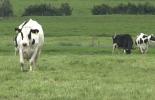 Renovar praderas, recuperar praderas, praderas, recuperación de praderas, renovación de praderas, Así podemos reversar el proceso de degradación de praderas, arado, Maquinaria para el establecimiento y manejo de praderas, Fedegán SENA, Agrosavia, cómo recuperar praderas, cómo renovar praderas, ganaderos, ganaderos colombia, ganado, bovinos, ganado bovino, Ganadería, ganadería colombia, noticias ganaderas, noticias ganaderas colombia, CONtexto ganadero, contextoganadero