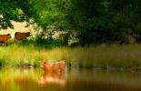 Agua ganadería sostenible, ganadería sostenible conservación del agua, cómo conservar agua con ganadería sostenible, cómo conservar agua con ganadería, cómo contribuye la ganadería a los recursos hídricos, cómo ayuda la ganadería a las fuentes de agua, fuentes de agua, ganaderos, ganaderos colombia, ganado, bovinos, ganado bovino, Ganadería, ganadería colombia, noticias ganaderas, noticias ganaderas colombia, CONtexto ganadero, contextoganadero