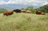 ganadería, ganadería colombia, noticias ganaderas, noticias ganaderas colombia, contexto ganadero, captura de carbono, cambio climático, medio ambiente, importancia del cambio climático, captura de carbono, ganadería en el cambio climático, árboles captura de carbono, suelo captura de carbono
