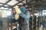bloqueos en las vías, paro, fiebre aftosa, brucelosis, campaña de vacunación, se retrasa campaña de vacunación, ICA, Fedegán-FNG, vacas, vacas Colombia, lechería, bovinos, ganadería bovina, ganadería bovina Colombia, noticias ganaderas, noticias ganaderas Colombia, contextoganadero