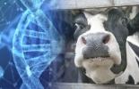 Miedo genética animales, miedo ganado bovino, miedo genética, miedo bienestar animal, miedo ganadería, miedo vacas, temperamento vacas, temperamento ganado bovino, temperamento bovinos, miedo en los animales, ganado bovino, ganadería bovina, ganaderos, ganaderos colombia, ganado, vacas, vacas Colombia, bovinos, Ganadería, ganadería colombia, noticias ganaderas, noticias ganaderas colombia, CONtexto ganadero, contextoganadero