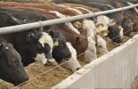 Ganadería, ganadería colombia, noticias ganaderas, noticias ganaderas colombia, CONtexto ganadero, producción ganadera, producción ganadera sostenible, suplementar, suplementar bovinos, por qué suplementar bovinos, modelo de negocio americano