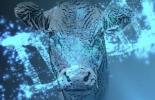 ganadería, ganadería colombia, noticias ganaderas, noticias ganaderas colombia, contexto ganadero, mejoramiento genético, genética, evaluaciones genéticas, evaluaciones genéticas tradicionales, evaluaciones genómicas, genómica