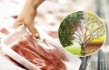 ganadería, ganadería colombia, noticias ganaderas, noticias ganaderas colombia, contexto ganadero, producción ganadera, producción ganadera sostenible, ganadería regenerativa, avances en la ganadería regenerativa, consumo de carne, producción de carne sostenible