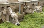 Ganadería, ganadería colombia, noticias ganaderas, noticias ganaderas colombia, CONtexto ganadero, antibiótico, uso de antibióticos en ganadería, uso de antimicrobianos en ganadería, nutrición bovinos