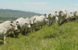 ganadería, ganadería colombia, noticias ganaderas, noticias ganaderas colombia, contexto ganadero, pastoreo ultra alta densidad, puad, practicas regenerativas, blanco orejinegro