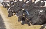 Ganadería, ganadería colombia, noticias ganaderas, noticias ganaderas colombia, CONtexto ganadero, producción ganadera, producción ganadera sostenible, suplementar, suplementar bovinos, por qué suplementar bovinos, modelo de negocio americano, suplementación comercial industrial, ficha técnica suplemento ganado, tabla nutricional suplemento comercial bovinos, suplementación ganado lechero, suplementación ganadeo de carne
