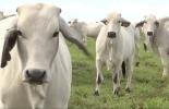 ganadería, ganadería colombia, noticias ganaderas, noticias ganaderas colombia, contexto ganadero, meta, departamento del meta, ganaderos del meta, abastecimiento de carne, carne en colombia, exportaciones de carne en colombia