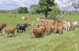ganadería, ganadería colombia, noticias ganaderas, noticias ganaderas colombia, contexto ganadero, empresa ganadera, proyecto ganadero, pasos para tener una empresa ganadera, pasos para tener una ganadería, pasos para consolidar una finca
