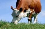 Medir consumo forraje, método herbvalo, medir consumo de forraje en el ganado, medición del consumo, consumo de forraje del ganado, consumo vacas, consumo, jornadas buiatría, estimaciones consumo, herbvalo, ganado bovino, ganadería bovina, carne, leche, ganaderos, ganaderos colombia, ganado, vacas, vacas Colombia, bovinos, Ganadería, ganadería colombia, noticias ganaderas, noticias ganaderas colombia, CONtexto ganadero, contextoganadero