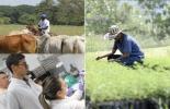 Ganadería, ganadería colombia, noticias ganaderas, noticias ganaderas colombia, CONtexto ganadero, producción ganadera, Productividad ganadera, areas profesionales de ganaderìa, agronomo en fincas, veterinarios en fincas, zootecnistas en fincas, nutricionistas en fincas, administrador agropecuario