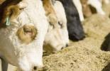 Ganadería, ganadería colombia, noticias ganaderas, noticias ganaderas colombia, CONtexto ganadero, producción ganadera, producción ganadera sostenible, suplementación, Suplementación Bovina, inversión de suplementación, animales suplementados, optimización de pasturas