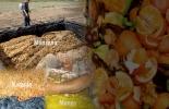 Ganadería, ganadería colombia, noticias ganaderas, noticias ganaderas colombia, CONtexto ganadero, Ganadería Sostenible, ensilaje, ensilaje de frutas, ensilaje de frutas para los bovinos, frutas para los bovinos, frutas para ensilaje, silo de frutas, ensilaje de manzana, silo de manzana, ensilaje de naranja, silo de naranja, ensilaje de totumo, Silo de totumo, ensilaje de mango, silo de mango