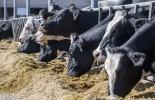 Ración Total Mezclada, Mixed Total Ration, dieta total mezclada, TMR, ventajas del sistema de TMR, ración totalmente mezclada, Planificar demanda de comida, disponer de alimentos sostenibles, cómo implementar TMR, ganado bovino, ganadería bovina, carne, leche, ganaderos, ganaderos colombia, ganado, vacas, vacas Colombia, bovinos, Ganadería, ganadería colombia, noticias ganaderas, noticias ganaderas colombia, CONtexto ganadero, contextoganadero
