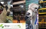 Agroexpo 2021, programación, conferencias, vacas, vacas Colombia, lechería, bovinos, ganadería bovina, ganadería bovina Colombia, noticias ganaderas, noticias ganaderas Colombia, contextoganadero