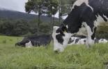 ganadería, ganadería colombia, noticias ganaderas, noticias ganaderas colombia, contexto ganadero, alimentacion bovina, alimentacion animal, alimentacion para bovinos, ganadero y agricultor, primero agricultor que ganadero, rentabilidad ganadera, productividad ganadera, pasturas, pasturas para bovinos, alimentacion basada en pasturas para bovinos