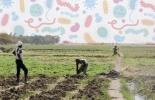 Ganadería, ganadería colombia, noticias ganaderas, noticias ganaderas colombia, CONtexto ganadero, bioseguridad, bioseguridad fincas, medidas de bioseguridad en la finca, protocolos de bioseguridad en la finca, cómo aplicar bioseguridad en la finca, recomendaciones de bioseguridad para la finca, distancia recorrida por virus, virus, bacterias, cuanto puede viajar un virus, aftosa, neumonía, cercas vivas, blindaje cercas vivas