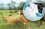 Ganadería, ganadería colombia, noticias ganaderas, noticias ganaderas colombia, CONtexto ganadero, biotecnologia para pequeños productores, biotecnoligia para pequeños ganaderos, inseminación para pequeños ganaderos, inversión en biotecnologia para pequeños ganaderos