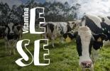 ganadería, ganadería colombia, noticias ganaderas, noticias ganaderas colombia, contexto ganadero, selenio, vitamina e, influencia del selenio en los bovinos, influencia de la vitamina e en los bovinos, vacas lecheras, selenio y vitamina E en los bovinos