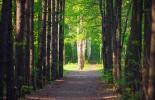 El secreto de los árboles