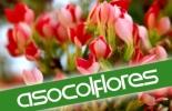 Balance Asocolflores 2013