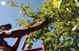 Producción hortifrutícola Colombia