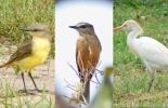 Aves que comen insectos.