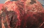 Contrabando de carne