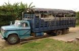 Contrabando de ganado en Colombia y Venezuela