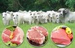 carne colombiana