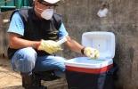 Ciclo de vacunación de Fedegán