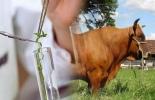 Genética animal y desarrollo productivo