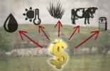 Factores a tener en cuenta para comprar finca ganadera