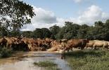 tecnología bovinos colombia