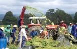 Estudiantes Sena ganadería