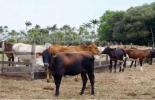 modelos competitivos sostenibles en producción bovina.jpg