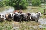 Lluvias para ganaderos